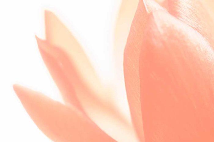 Cactus flower-photo by Mika Shiraiwa
